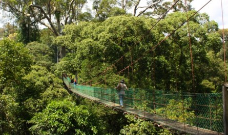 Canopy walk of Danum Valley