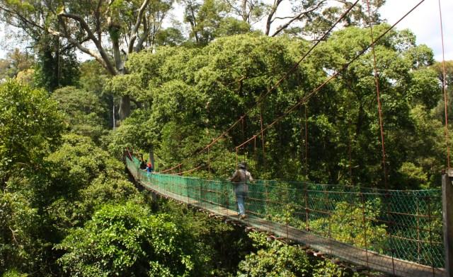 Canopy walk of Danum Valley