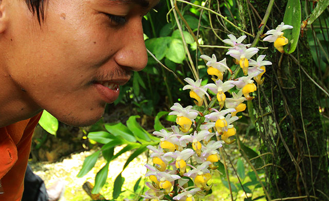 Orchid Gardens of Sabah Agriculture Park