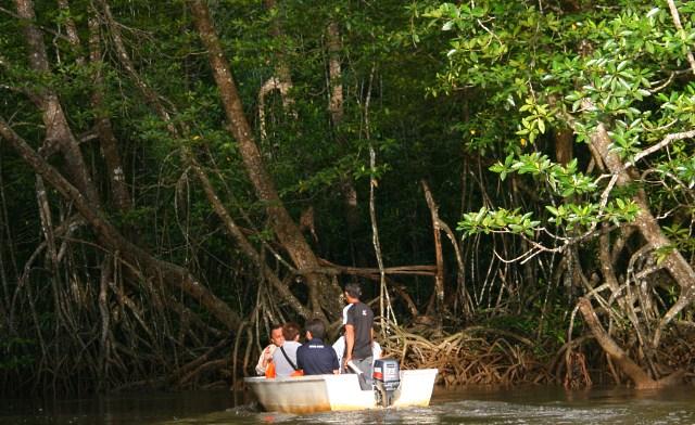 Mangrove Forest of Bongawan River