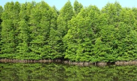 KK Wetlands