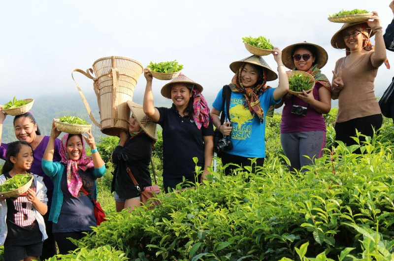 Sabah Tea Garden, the Organic Tea Farm of Borneo