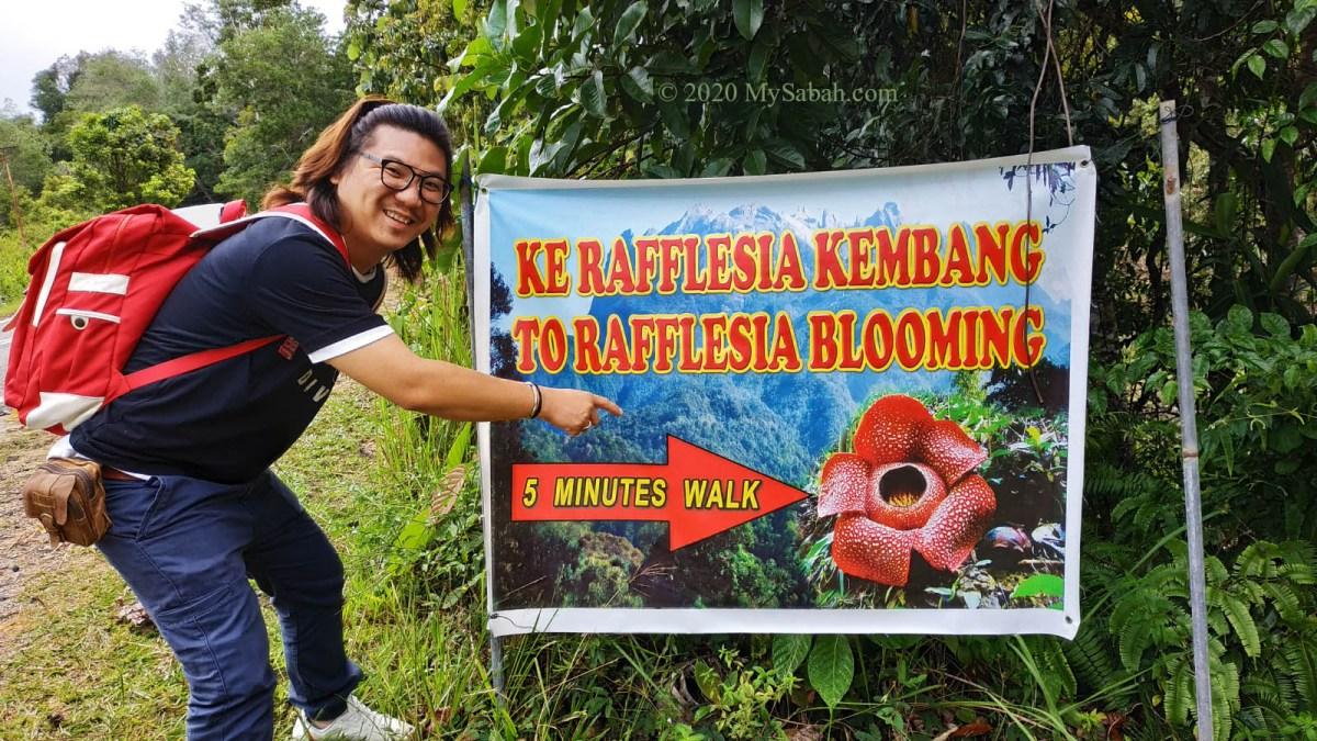 Roadside notice of blooming rafflesia flower