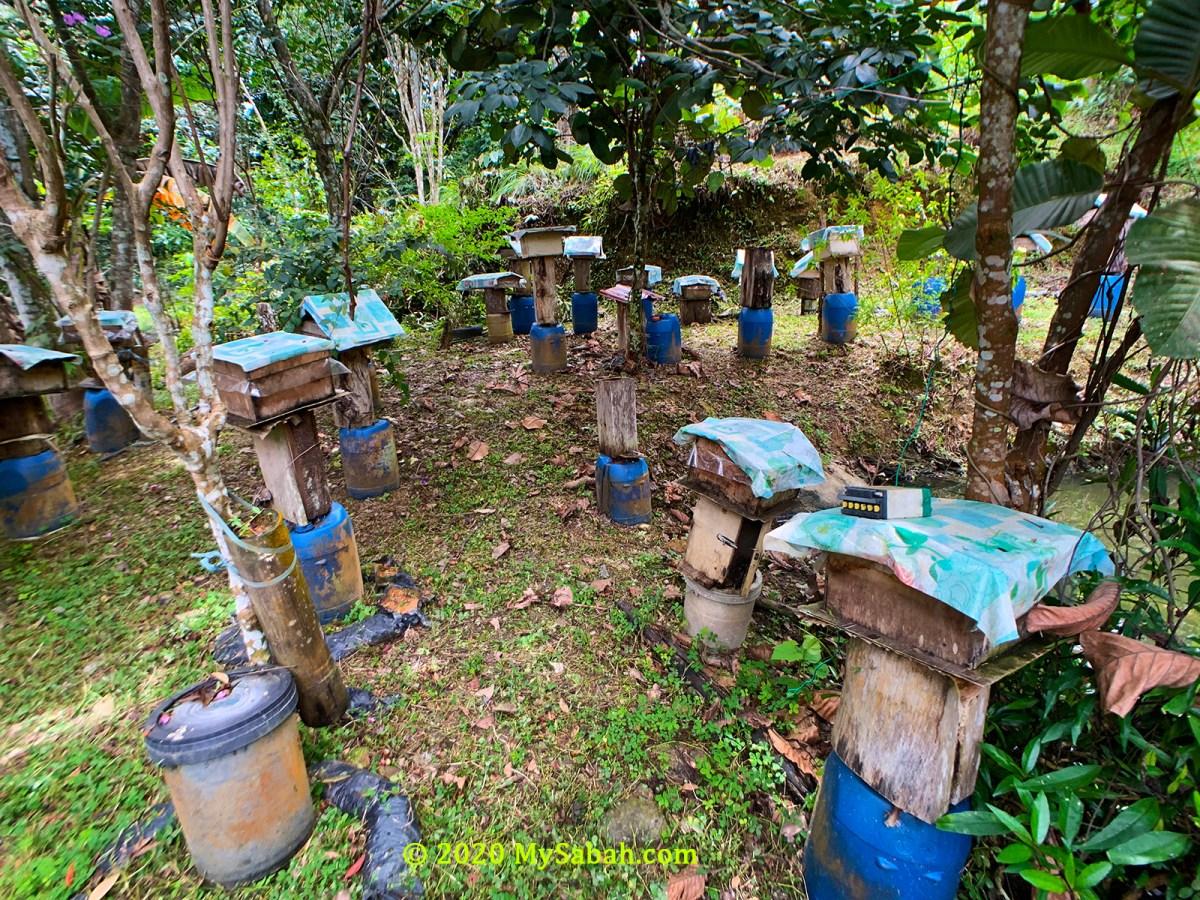 Stingless bee farm in Kota Belud (Kampung Pinolobu)