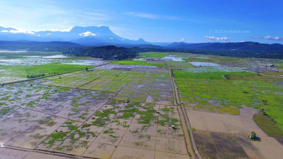 Wetlands of Tempasuk Plains
