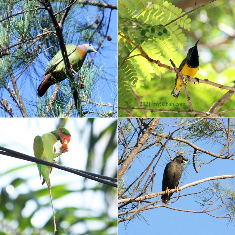 Birds of Tanjung Aru Beach
