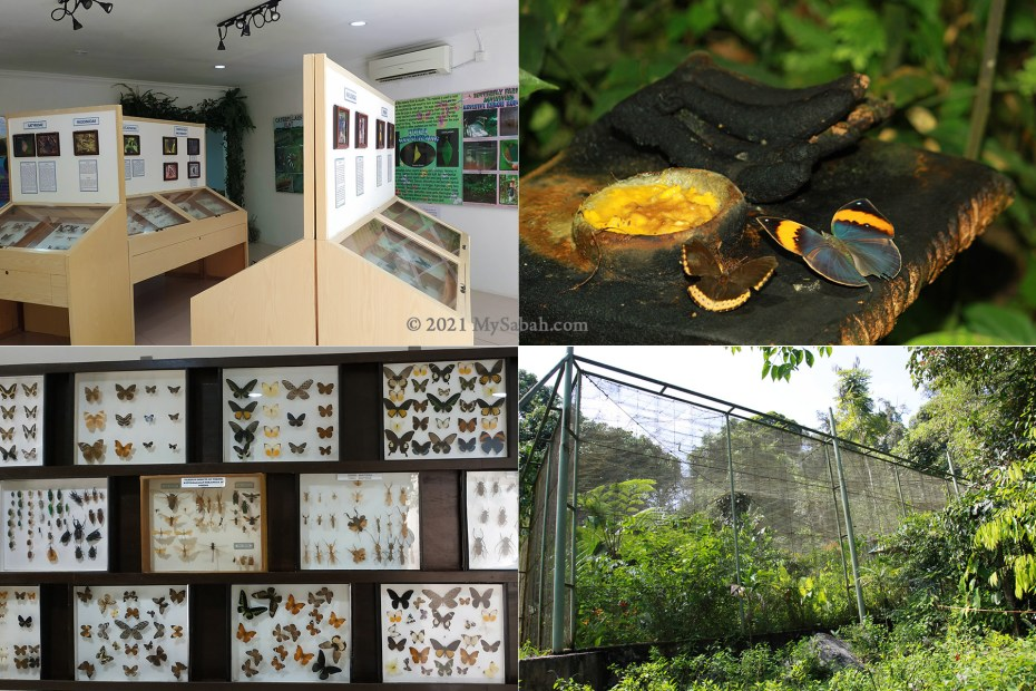 The Exhibition Gallery and Enclosure of Poring Butterfly Farm