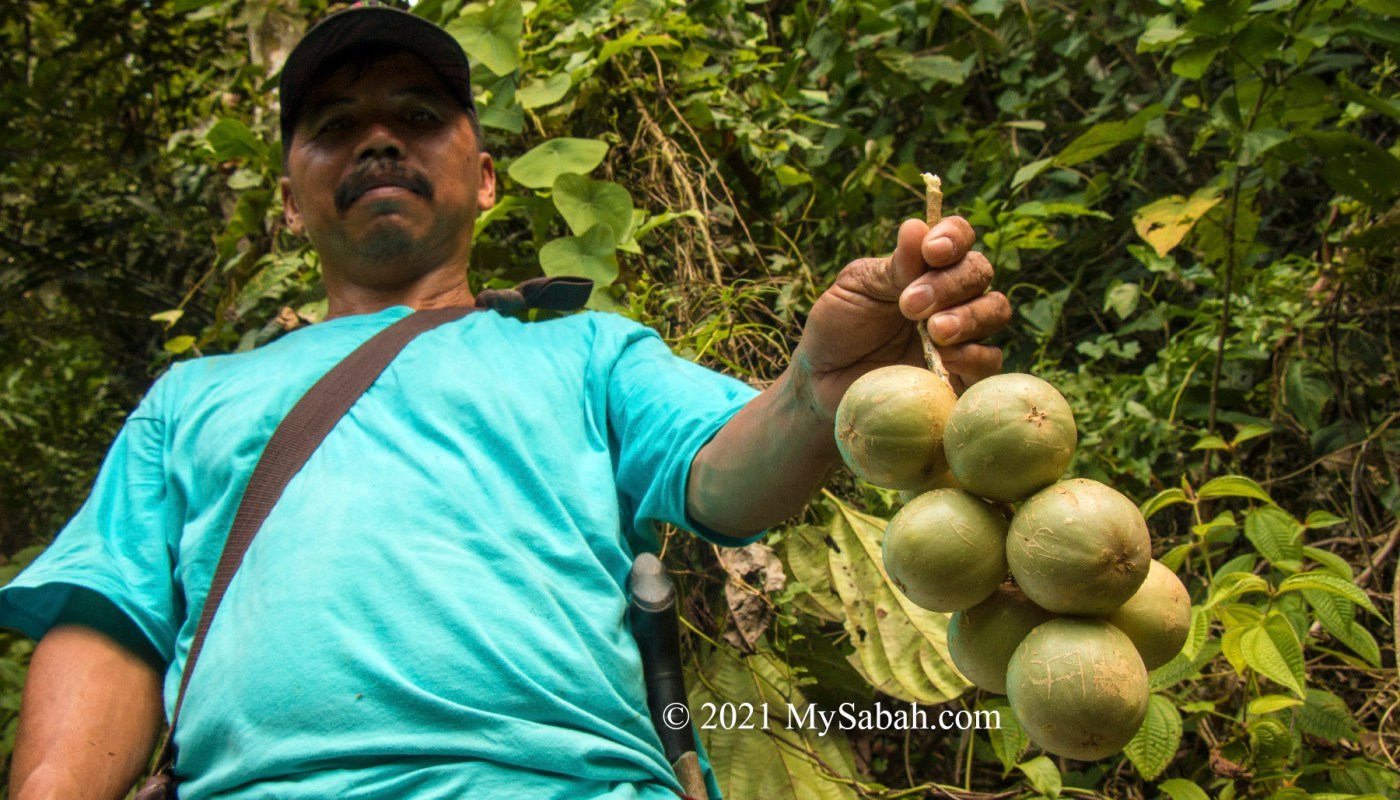 villager holding the liposu / limpasu fruits