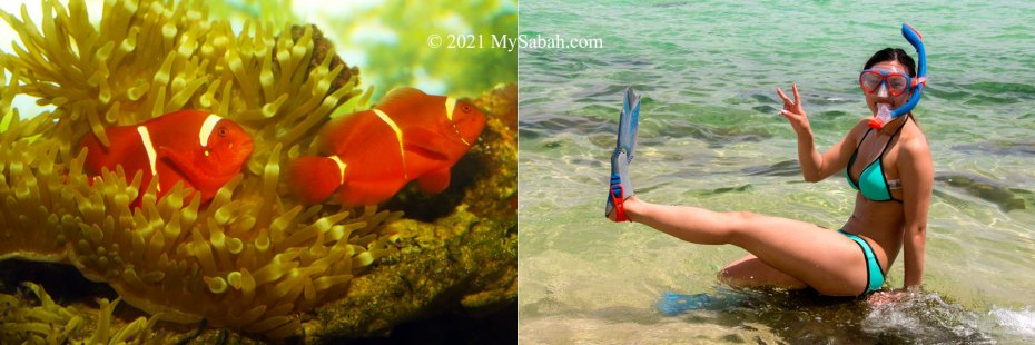 Clown fishes and tourist