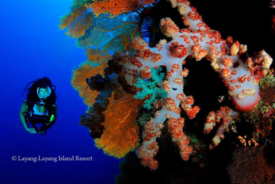 Soft corals of Layang-Layang