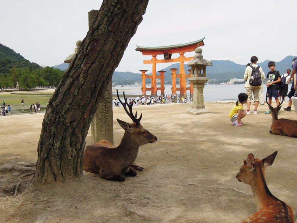 Cervi di fronte al torii di Itsukushima