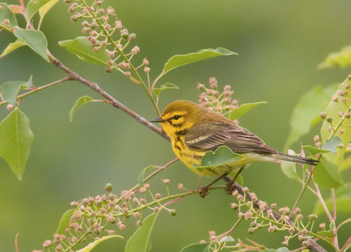 Post image for SOLF to host early morning bird walk on Saturday