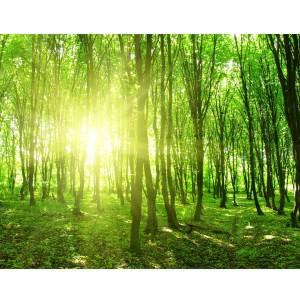 Green Woods Canvas art