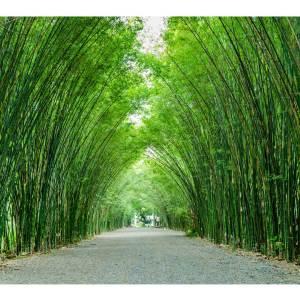 Bamboo Tunnel Canvas art