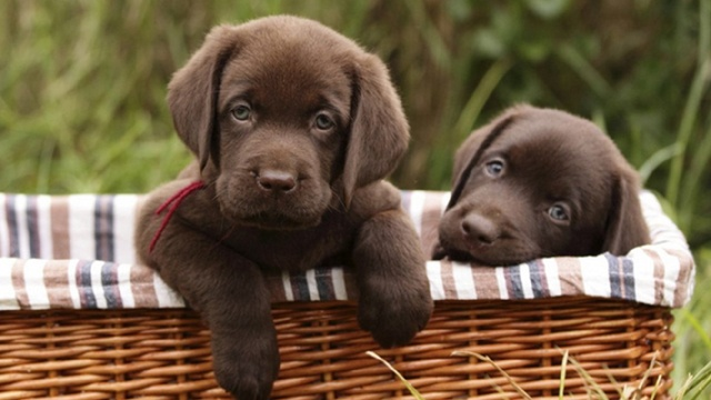Dog Breeds - Generic_1835397496554329-159532