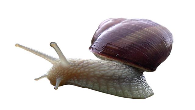 snail_1467206903025_108021_ver1.0_640_360_1526574862127.jpg