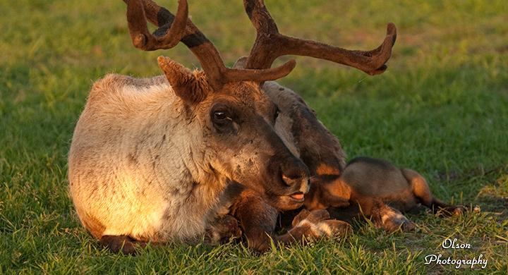 summerfield babies_1525276233406.jpg.jpg