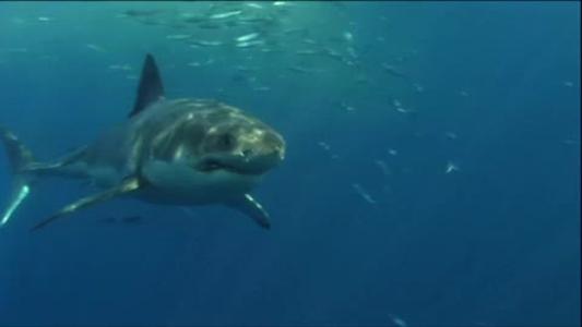 Teen Survives Great White Shark Attack In Australia_01715816-159532