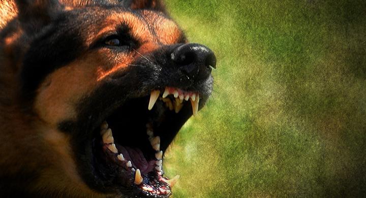 dog attack_1559603499075.jpg.jpg