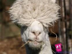 Οι πιο αστείες φωτογραφίες που έχετε δεί με ζώα! (photos)