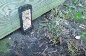 Βάτραχοι παρακολουθούν έντομα σε iPhone