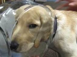 28 αξιολάτρευτοι σκύλοι που πήραν λάθος και βιαστικές αποφάσεις