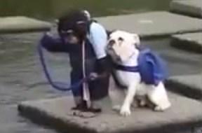 Πίθηκος και σκύλος σε διέλευση ποταμού