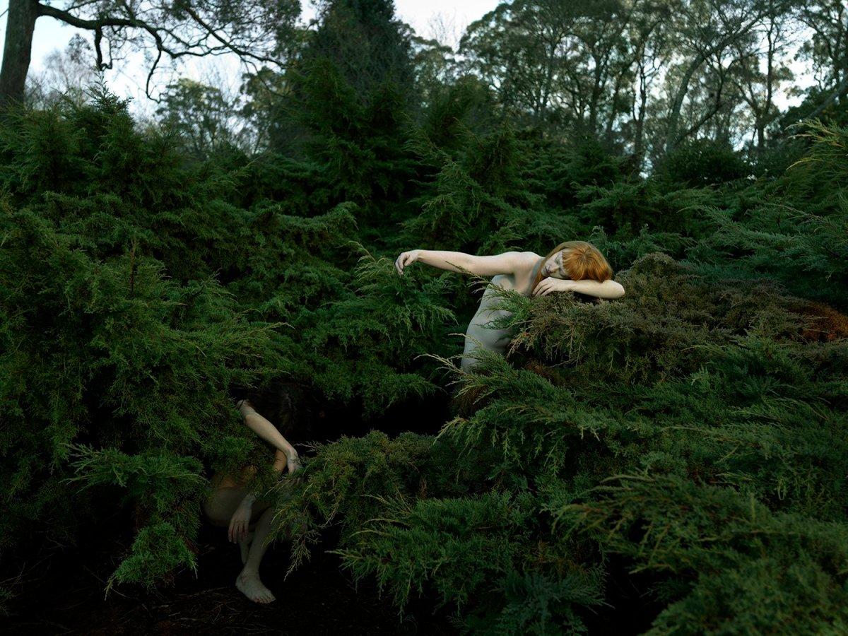 Juniper Glade (Juniperus) in Winter, Tamara Dean.