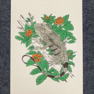 Iguana in Geiger tree