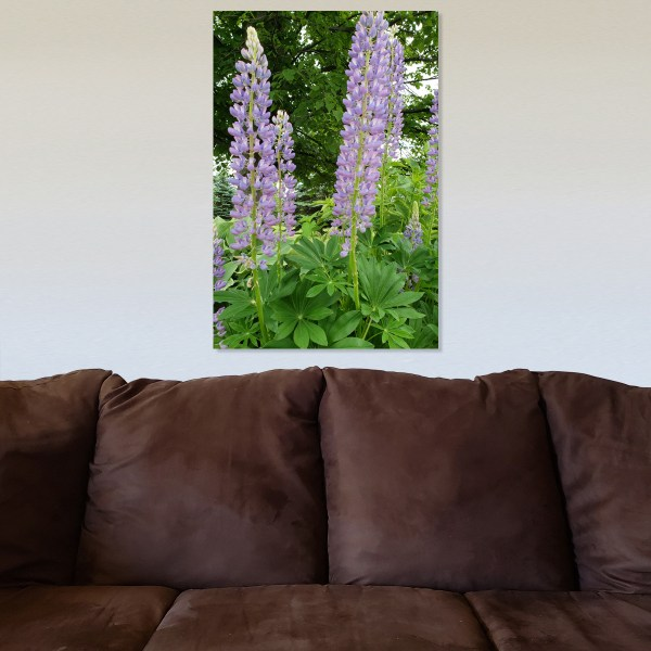 Lupids Canvas with background