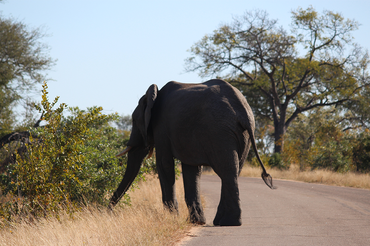 Sunny on Safari: Exploring Kruger National Park