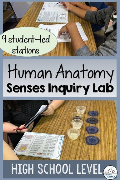 Five Senses Lab Stations