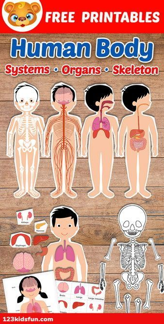 Human Body Systems for Kids Free Printables Homeschooling
