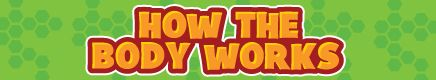 How the Body Works Movies for Kids