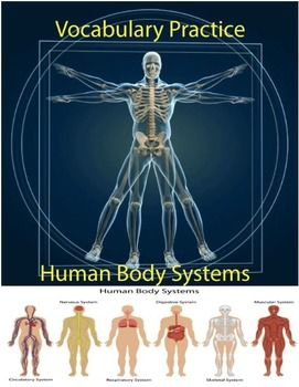Human Body Systems Vocabulary Practice