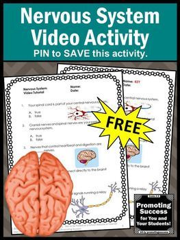 FREE Nervous Human Body Systems 5th Grade Science Distance Learning Packet