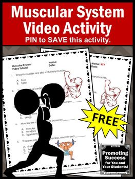 FREE Muscular Human Body System 5th Grade Science Distance Learning Packet