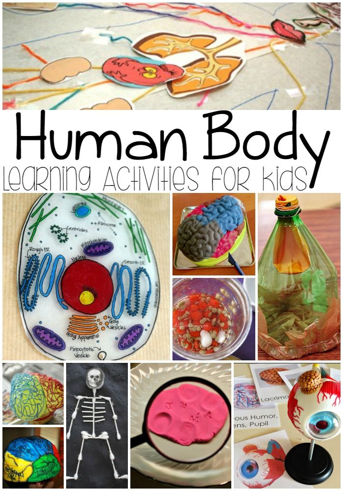 Human Body Learning Activities for Kids A Spectacled Owl