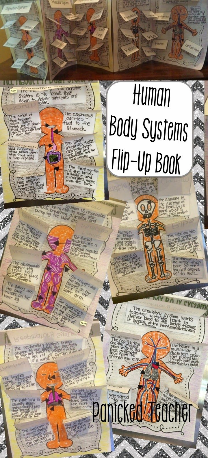 Human Body Systems FREEBIE and NEW FLIP UP Books