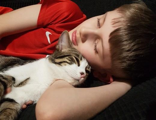 James cuddling our grey kitten