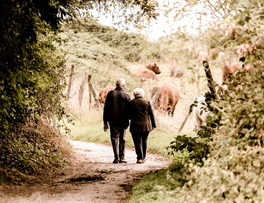 old couple walking in the countryside towards a field of highland cattle