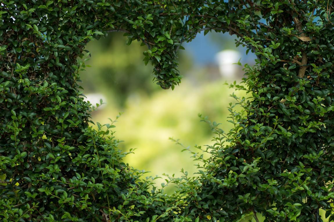 A heart shape cut into a green hedge