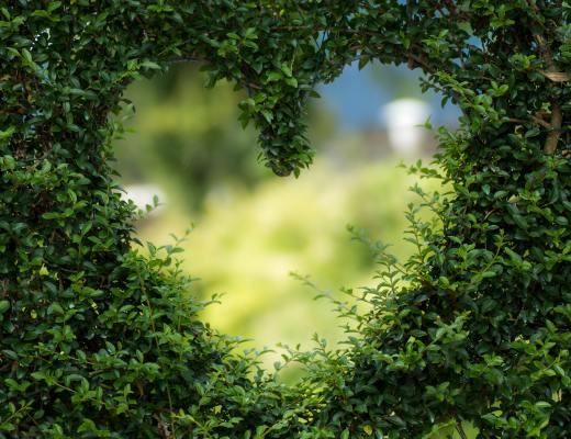 A heart shape cut into a green hedge