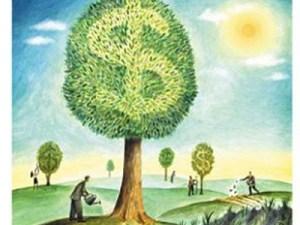 1351880853_money-tree-2