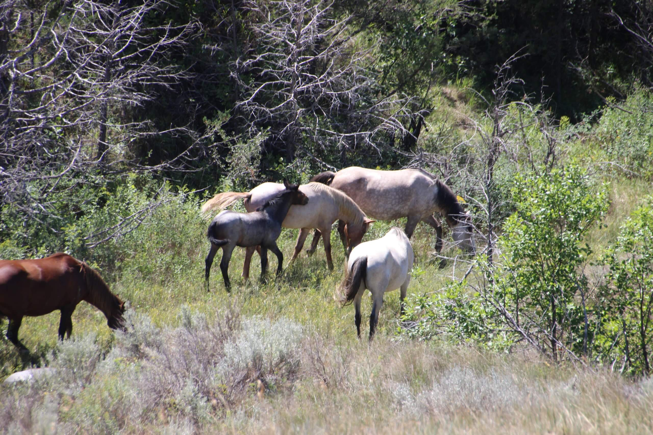 Guide To Visiting Theodore Roosevelt National Park My