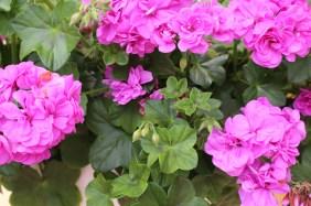 Unser Garten, eine blühende Oase