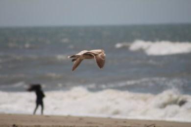 Mandalay State Beach