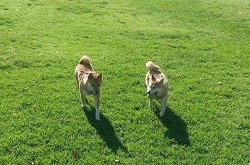 Die Amerikaner und ihr Hund