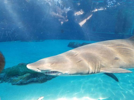 Aquariumof the Pacific