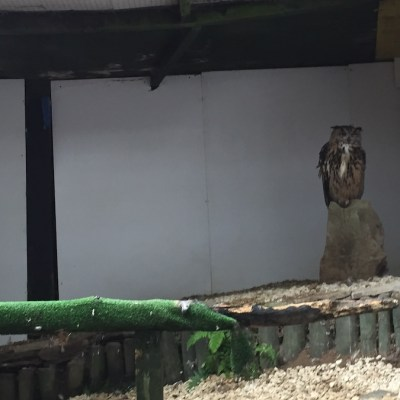 Owl Sanctuary